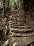 Steps on the Inca Trail, Peru, South America Photographic Print by Rob Cousins