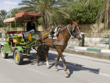 Horse and Carriage, Tozeur, Tunisia, North Africa, Africa Photographic Print by Ethel Davies