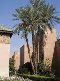 Saadian Tombs, Marrakech, Morocco, North Africa, Africa Photographic Print by Ethel Davies
