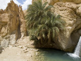 Desert Oasis, Chebika, Tunisia, North Africa, Africa Photographic Print by Ethel Davies