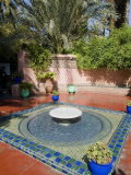 Jardin Majorelle, Marrakech, Morocco, North Africa, Africa Lmina fotogrfica por Ethel Davies