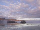 Canada Geese, Derwent Water, Lake District National Park, Cumbria, England, United Kingdom Fotoprint van Neale Clarke