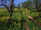 Spring Flowers, Sao Jao, Baroa, Algarve, Portugal Photographic Print by Neale Clarke