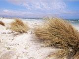 Bales Beach, Seal Bay Con. Park, Kangaroo Island, South Australia, Australia Photographic Print by Neale Clarke