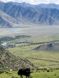 Yak, Ganden Monastery, Near Lhasa, Tibet, China Fotografisk tryk af Ethel Davies
