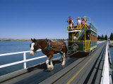 Horse Drawn Tram, Victor Harbour, South Australia, Australia Photographic Print by Neale Clarke