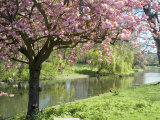 Blossom, Regents Park, London, England, United Kingdom Photographic Print by Ethel Davies
