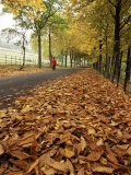 Autumn Leaves and Lone Figure at More Hall Reservoir, South Yorkshire, England Photographic Print by Neale Clarke