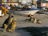 Fishermen's Dogs Awaiting Their Return, Horcon, Chile, South America Photographic Print by Mark Chivers