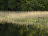 Reeds Along the Shore of Trakai Lake, Near Vilnius, Lithuania, Baltic States Photographic Print by Gary Cook