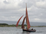 Galway Hookers at Roundstone Regatta, Connemara, County Galway, Connacht, Republic of Ireland Photographic Print by Gary Cook