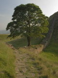 Sycamore Gap, Hadrian's Wall, Nothumberland Photographic Print by James Emmerson