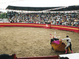 Bull Fighting, Tena, Ecuador, South America Photographic Print by Mark Chivers