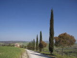 Country Road and Cypresses Near Pienza, Val d'Orcia, Tuscany, Italy Photographic Print by Angelo Cavalli