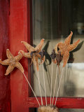 Chinese Food, Starfish, Beijing, China Photographic Print by Angelo Cavalli