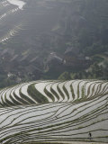 Farmer in Longsheng Terraced Ricefields, Guangxi Province, China Photographic Print by Angelo Cavalli