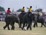 Elephants Playing Football, Elephant Round-Up Festival, Surin City, Thailand, Southeast Asia Photographic Print by Alain Evrard