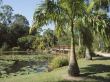 Palms and Centenary Lakes, Cairns, Queensland, Australia Photographic Print by Ken Gillham