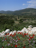 Flowers and Landscape, Greece Photographic Print by Tony Gervis