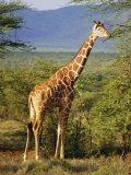 Giraffe, Samburu National Reserve, Kenya Photographic Print by Robert Harding