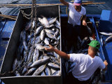 Fishermen with Catch, Santiago, La Gomera, Canary Islands, Spain Photographic Print by Robert Harding