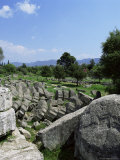 Fallen Pillars from the Temple of Zeus, Olympia, Unesco World Heritage Site, Greece Photographic Print by Tony Gervis