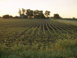 Soy Bean Field, Hudson, Illinois, Midwest, USA Photographic Print by Ken Gillham