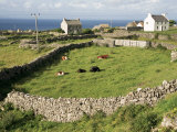 Walled Fields, Inishmore, Aran Islands, County Galway, Connacht, Eire (Republic of Ireland) Photographic Print by Ken Gillham