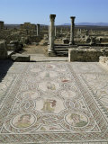 Mosaics from the 3rd Century, Volubilis, Unesco World Heritage Site, Morocco, North Africa, Africa Photographic Print by Tony Gervis