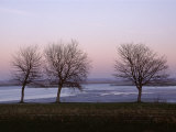 Bare Trees in Winter, St. Valery Sur Somme, River Somme Estuary, Picardie (Picardy), France Photographic Print by Peter Higgins