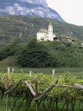 Church and Vines at Missiano, Caldero Wine District, Bolzano, Alto Adige, Italy Photographic Print by Michael Newton