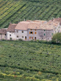 Vineyards Near Fumane in the Centre of the Valpolicella Classico Zone, Fumane, Veneto, Italy Photographic Print by Michael Newton