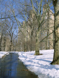 Bare Trees and Snow in Winter in Central Park, Manhattan, New York City, USA Photographic Print by David Lomax