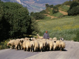 Shepherd on a Country Road, Castelvetrano, Island of Sicily, Italy, Mediterranean Photographic Print by Michael Newton