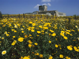 Banks of Wild Spring Flowers in the Marsala Hills, Near Marsala, Sicily, Italy Photographic Print by Michael Newton