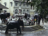 Bathing Elephants in Fountain, Kandy, Sri Lanka Photographic Print by Alain Evrard