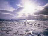 Pack Ice with Dominican Gulls, Antarctica, Polar Regions Photographic Print by Geoff Renner