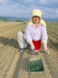 Planting Onions, Hokkaido, Japan Photographic Print by Gavin Hellier