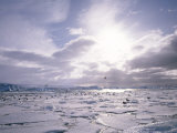 Dominican Gulls and Skuas on Pack Ice, Antarctica, Polar Regions Photographic Print by Geoff Renner