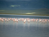 Flamingoes, Serengeti National Park, Unesco World Heritage Site, Tanzania, East Africa, Africa Photographic Print by Sybil Sassoon