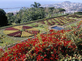 Jardim Botanico (Botanical Gardens), Funchal, Madeira, Portugal, Atlantic Photographic Print by Jenny Pate