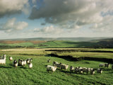 Sheep on Abney Moor on an Autumn Morning, Peak District National Park, Derbyshire, England Photographic Print by David Hughes