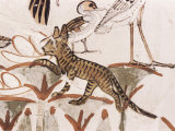 Cat Climbing Papyrus Stem in Duck Hunting Scene, Tomb of Menna, 18th Dynasty, Valley of the Nobles Photographic Print by Walter Rawlings