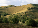 Landscape Near Chieti, Abruzzo, Italy Photographic Print by Michael Newton