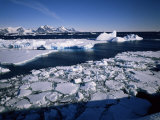 Coastal Scenery, Antarctic Peninsula, Antarctica, Polar Regions Photographic Print by Geoff Renner
