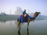 Camel by the Yamuna River with the Taj Mahal Behind, Agra, Uttar Pradesh State, India Photographic Print by Gavin Hellier