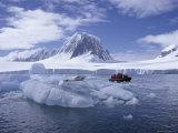 Tourists in Rigid Inflatable Boat Approach a Seal Lying on the Ice, Antarctica Photographic Print by Geoff Renner