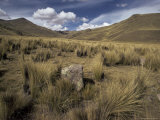 Bunch Grass on Windswept Altiplano, Puno, Cuzco, Peru, South America Photographic Print by Walter Rawlings