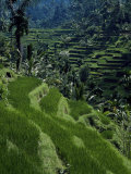 Terraced Rice Fields Near Gagah, Bali, Indonesia, Southeast Asia Photographic Print by James Green