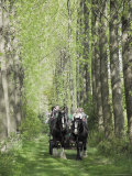 Horse and Carriage Carrying Tourists Down Avenue of Poplar Trees in the Grounds of Umberslade Hall Photographic Print by David Hughes
